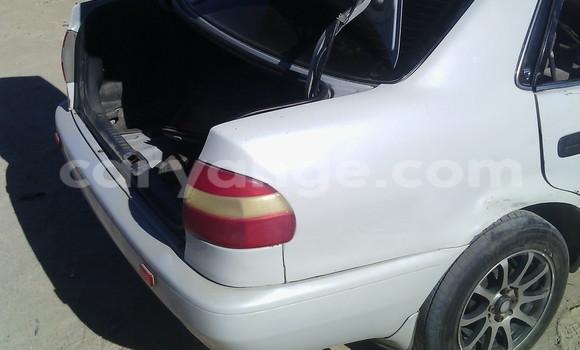 Buy Toyota Corolla White Car in Swakopmund in Namibia