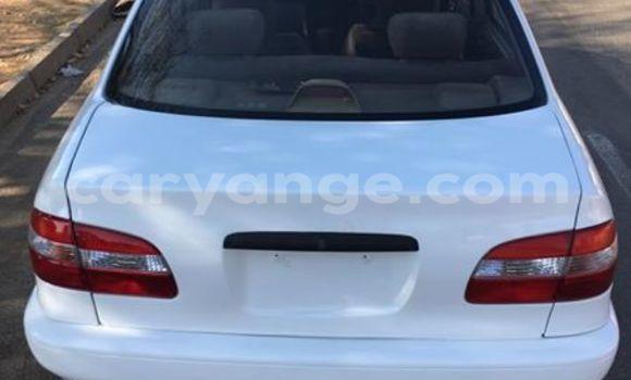 Buy Toyota Corolla White Car in Windhoek in Namibia